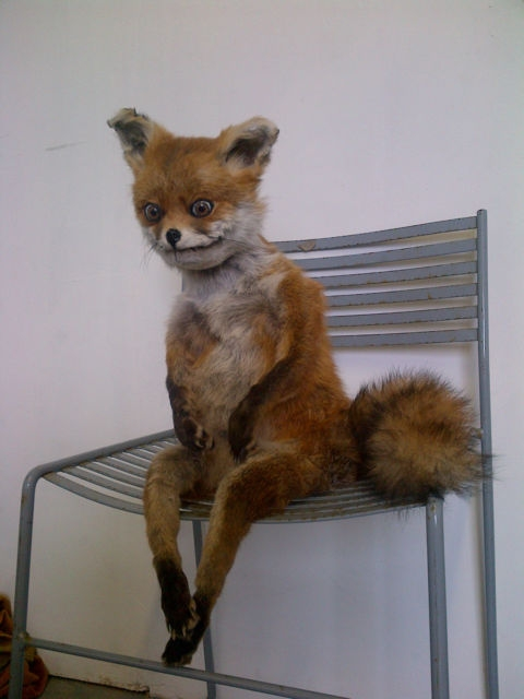 e926 ambiguous_gender anthro canine chair drugs fox fur lol_comments looking_at_viewer mammal nightmare_fuel oddly_cute orange_fur plushie real sitting solo source_request stoned stoned_fox taxidermy uncanny_valley unknown_artist what_has_science_done where_is_your_god_now white_fur why