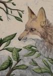 2010 ambiguous_gender black_nose blackdiaraikia canine dr621 feral forest fox fur headshot_portrait mammal orange_fur outside plant portrait snout solo tree vixey white_fur woodRating: SafeScore: 3User: dr621Date: July 01, 2010