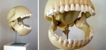 bone gaping_mouth le_gentil_garcon male mouth_shot open_mouth pac-man pac-man_(series) real skeleton skull teeth video_games zero_picturedRating: SafeScore: 0User: AnomynousDate: August 30, 2009