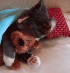 ambiguous_gender animated bedding blanket cat cuddling cute feline feral hug looking_at_viewer loop low_res mammal pillow plushie real solo teddy_bear unknown_artistRating: SafeScore: 42User: [GER]rayDate: December 16, 2010