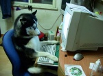 4:3 4_toes ambiguous_gender black_fur black_nose canine cd chair cheek_tuft chest_tuft computer curtains desk dog feral floppy_disk fur half-closed_eyes husky inside mammal monitor multicolored_fur office_chair paper photography_(artwork) real side_view sitting solo toes tuft two_tone_fur unimpressed unknown_artist what whiskers white_fur window wine_glassRating: SafeScore: 60User: mscDate: February 03, 2008