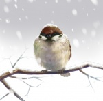 ambiguous_gender avian beak bird branch eurasian_tree_sparrow eyes_closed feral on_branch outside realistic restricted_palette shoudoubutsu sitting snow solo winter