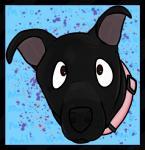 ambiguous_gender black_eyes black_fur brown_eyes canine collar dog feral fur mammal solo text wof_banazerafRating: SafeScore: 1User: wofDate: February 26, 2017