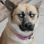 ambiguous_gender blue_eyes canine collar dog feral lol_comments low_res mammal pink_collar reaction_image real solo unknown_artist ಠ_ಠRating: SafeScore: 98User: Mysterious_FoxDate: December 16, 2010