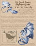 ambiguous_gender black_eyes black_scales branch dragon english_text feral field_guide flying grey_scales heather_bruton map membranous_wings scales tan_scales text white_scales wingsRating: SafeScore: 0User: ClawstripeDate: September 23, 2017