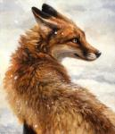 2015 abstract_background ambiguous_gender black_fur black_lips black_nose brown_eyes brown_fur canine detailed feral fox fur inner_ear_fluff kenket long_mouth looking_back mammal no_sclera orange_eyes orange_fur outside photorealism portrait red_fox simple_background slit_pupils snout snow solo whiskers white_background white_fur