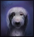 black_fur black_nose border canine detailed dog feral front_view fur headshot_portrait looking_at_viewer male mammal nude portrait purple_background simple_background solo superboll white_fur yellow_eyes