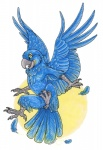 ambiguous_gender anisodactyl anthro avian bird feathered_wings feathers female flying hyacinth_macaw macaw nude parrot solo spread_wings wingedwolf wingsRating: SafeScore: 12User: TauxieraDate: May 16, 2013