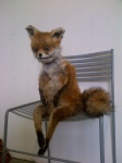 ambiguous_gender anthro canine chair drugs fox fur lol_comments looking_at_viewer mammal nightmare_fuel oddly_cute orange_fur plushie real sitting solo stoned stoned_fox taxidermy uncanny_valley unknown_artist what_has_science_done where_is_your_god_now white_fur why