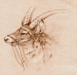 asemo cervine elk ghibli male mammal monochrome portrait princess_mononoke red_elk solo yakkulRating: SafeScore: 7User: TauxieraDate: November 10, 2009