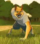anthro army canine clothing detailed_background dog english_text exercise forest german_shepherd grass green_eyes grin kanic looking_at_viewer male mammal military nature outside push-up razi shorts sky smile solo text tree wood