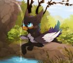 avian azukipuddles bird blue_eyes creek day female feral gryphon magpie outside reysi solo tongue tongue_out water waterfallRating: SafeScore: 1User: AzukiPuddlesDate: May 24, 2018