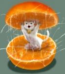 ambiguous_gender cat feline feral food fruit mammal orange_(fruit) parody sazae-san solo suggestive tama_(sazae-san) uziga_waita wet whatRating: SafeScore: 4User: VulpesFoxnikDate: August 08, 2009