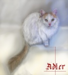 abstract_background adler ambiguous_gender cat feline feral german_text gradient_background green_eyes looking_at_viewer mammal mastersdoggy simple_background solo text translated whiskersRating: SafeScore: 2User: WolfchildDate: November 23, 2010